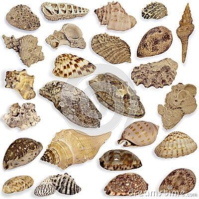 Collection seashell