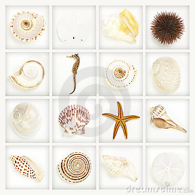 Collection, seashells on white