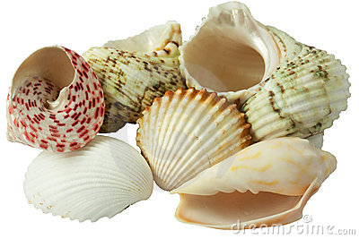 Collection of see shells