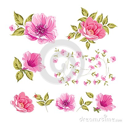 Free Collection Set Of Flower Heads. Royalty Free Stock Image - 41206626
