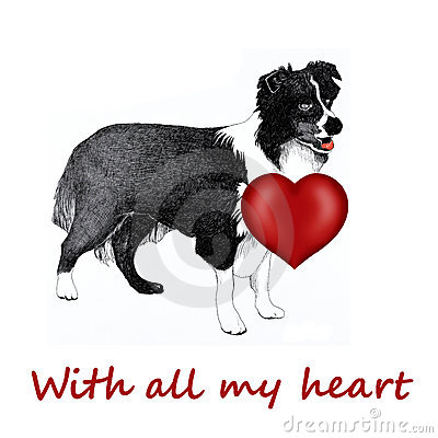 Collie dog with love heart