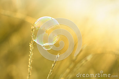 Coloful bubble in sunset