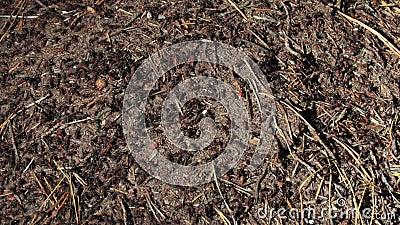 Colonie de fourmi dans la forêt banque de vidéos