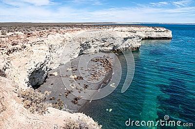 Sea lions near Puerto Madryn, Argentina