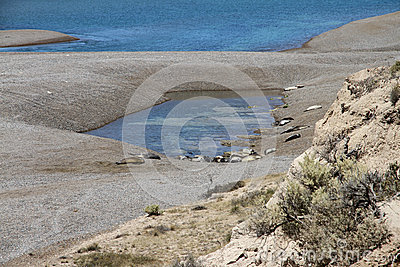 Colony of sea lions on the Patagonian coast in Argentina.