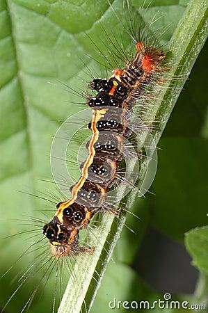 Color caterpillar