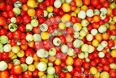 Color of tomato