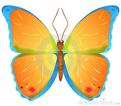 Color vector butterfly