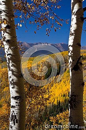 Colorado Golden Vista