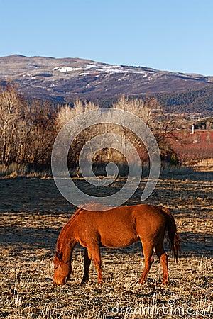 Colorado Horse Ranch