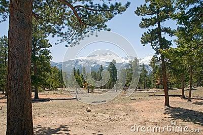 Colorado mountain forest