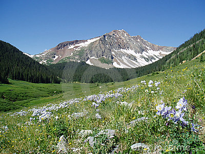 Colorado mountain with lupines