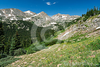 Colorado Mountain Wildflower Landscape