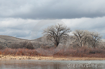 Colorado River with Bare Cottonwoods