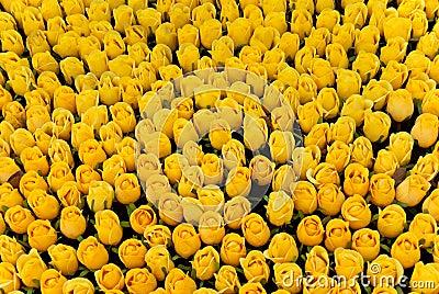 Colore giallo delle rose