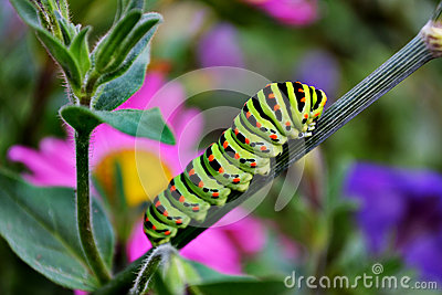 Colored caterpillar on grass