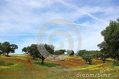 Colored field in alentejo in the Spring.