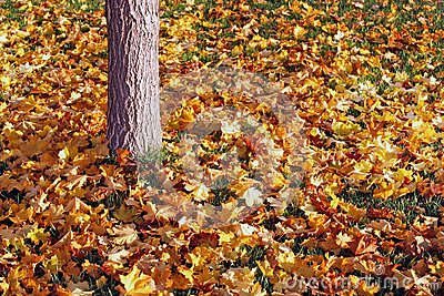 Colored Leaves Below A Grey Tree Trunk Free Public Domain Cc0 Image