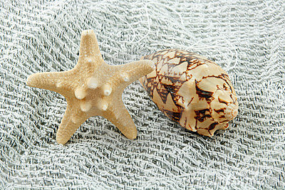 Colored Seashell (Starfish and Scallop)