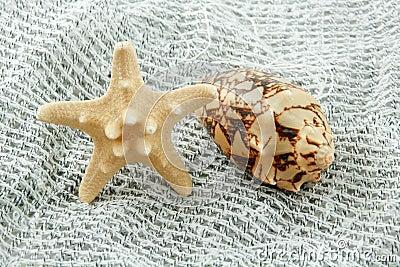 Colored Seashell (Starfish and Scallop)