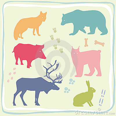 Colored Wild Animals  Set