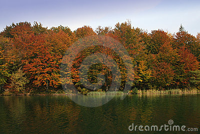 Colores de la caída