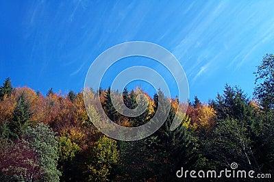 Colores del otoño