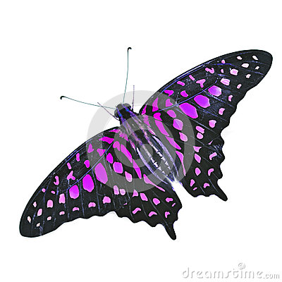 Colorfu Butterfly