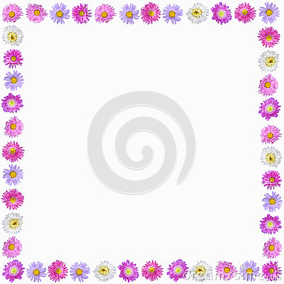 Colorful aster flowers frame isolated