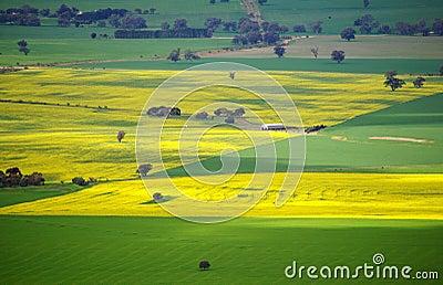 Colorful Australian Meadows