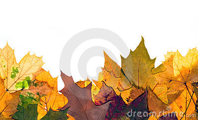 Colorful autum leaves