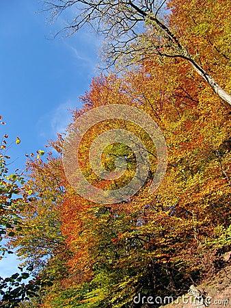 Free Colorful Autumn Stock Image - 531151