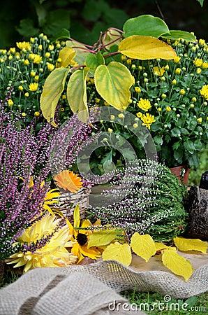Autumn flowers in the garden