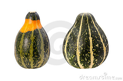 Colorful Autumn Gourds isolated with clipping path