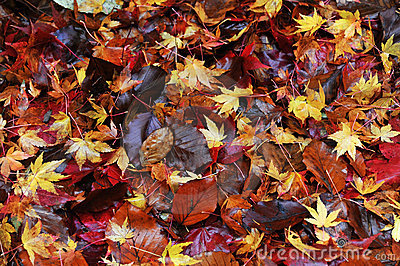Colorful autumn leaves