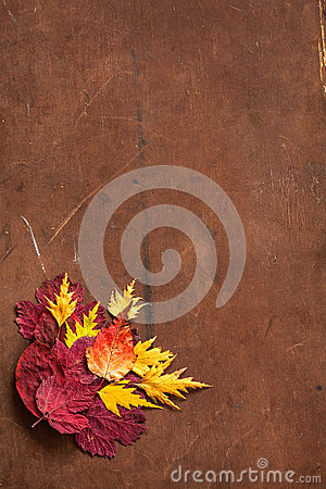 Free Colorful Autumn Leaves On Dark Rustic Background Stock Photography - 78307972