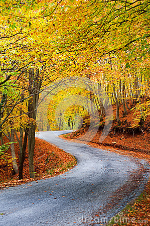 Colorful autumn path