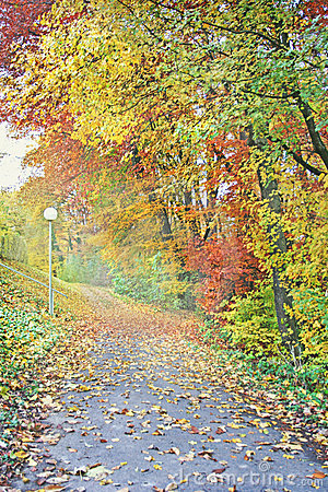 Free Colorful Autumn Path Royalty Free Stock Image - 3054646