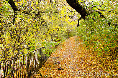 Colorful autumn path background fallen tree leaves