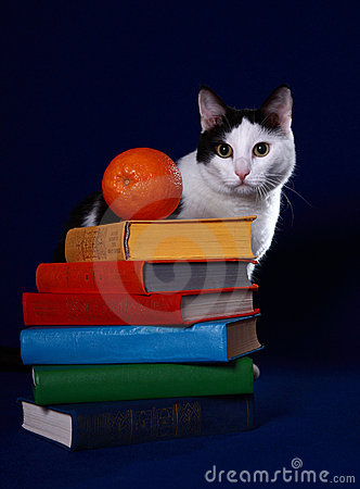 Colorful books, a cat and an orange on blue