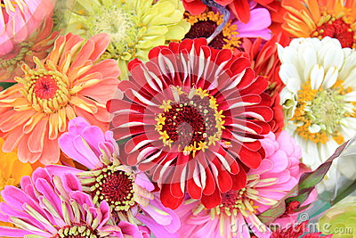 Colorful bouquet of homegrown flowers