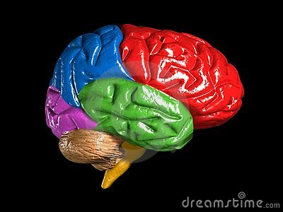 Colorful brain model