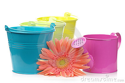 Colorful buckets, watering can and gerbera
