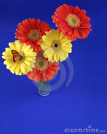Free Colorful Bunch Stock Images - 378504