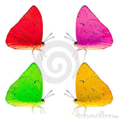 Colorful Butterflies Isolated