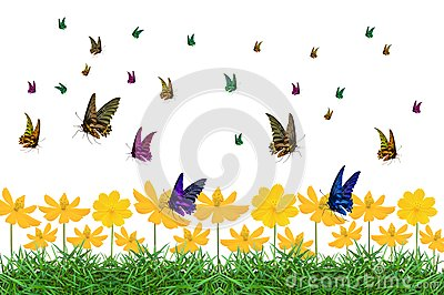 Colorful of butterfly