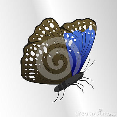 Colorful butterfly with abstract decorative pattern summer free fly present silhouette and beauty nature spring insect Vector Illustration