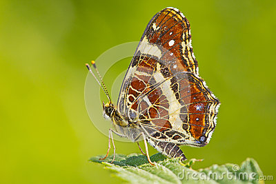 Colorful butterfly closeup over blurred background