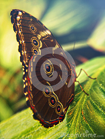 Free Colorful Butterfly On A Leaf Royalty Free Stock Image - 49965696