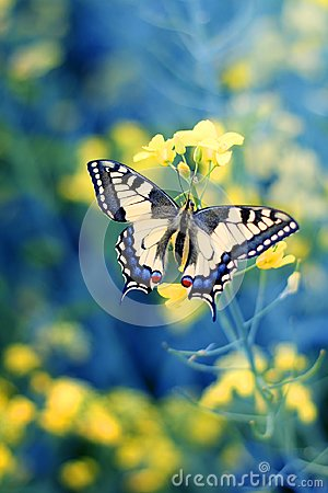 Free Colorful Butterfly On Flower,close Up Stock Images - 109696384